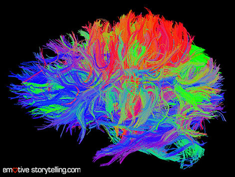 2012-03-21brainfibersimage.crop